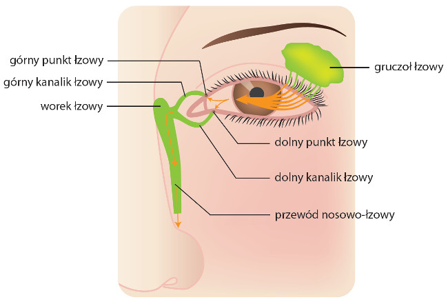 Chirurgia oka, które są wykonywane w Rzeszowie dla m.in. Lublina i Krakowa